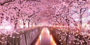Giappone Sakura
