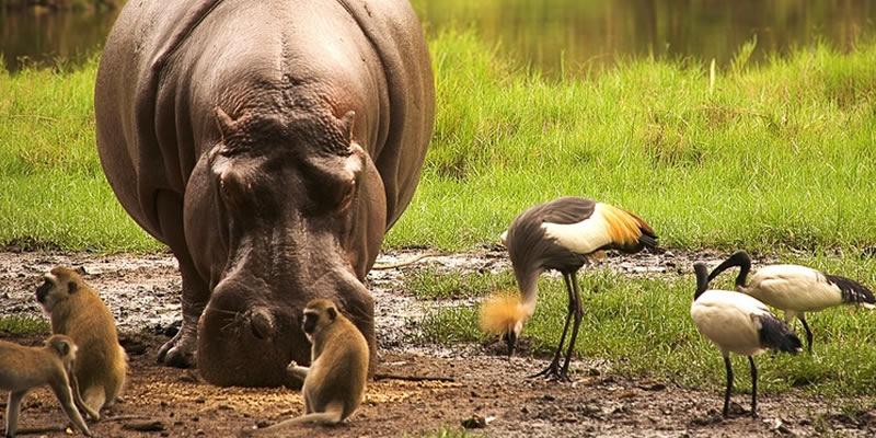 Safari Amboseli Special