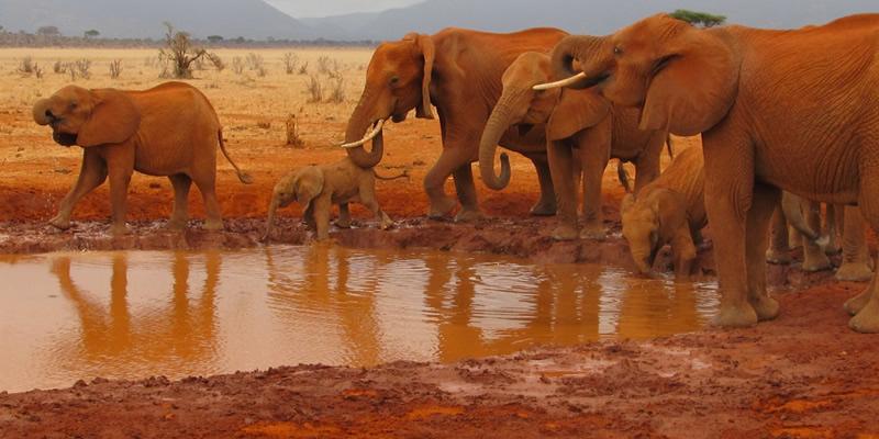 Safari Tsavo Est