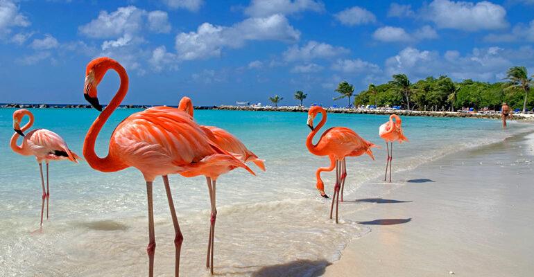 Caraibi Aruba e Antigua